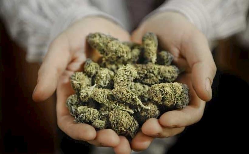 трава не наркотик